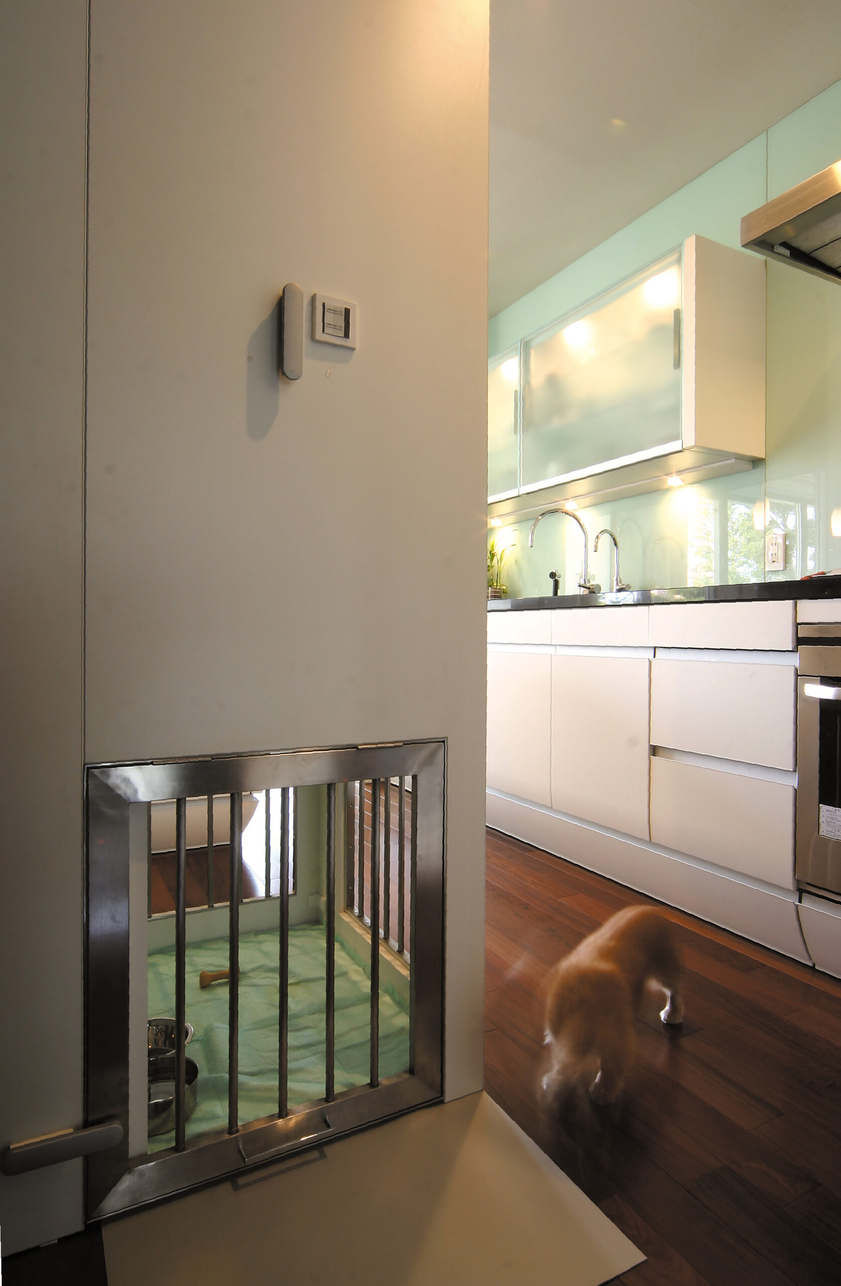 kitchen_pet_2